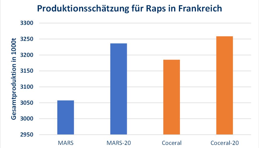 Neue Ernteschätzungen für die Rapssaat
