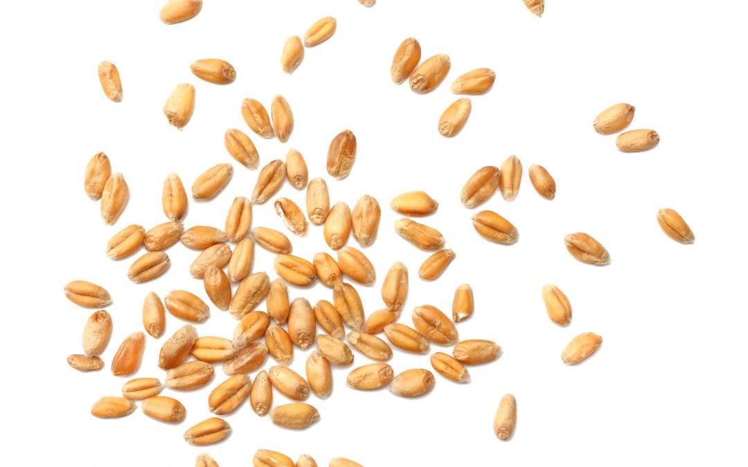 Das Wetter bestimmt die Richtung beim Weizen
