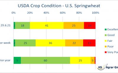 Sommerweizen schlecht bewertet – Warten auf USDA