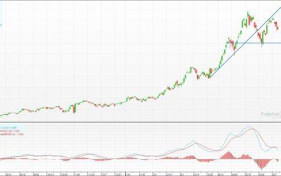Ölsaaten Angebot und Nachfrage 21/22 – Das sagt das USDA