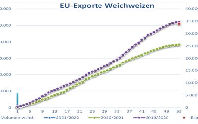 DRV setzt deutsche Weizenernte niedriger an