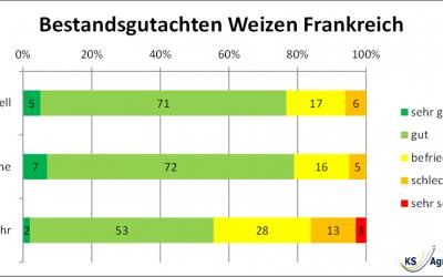 MATIF Weizenpreise reflektieren Ertrags- und Qualitätssorgen