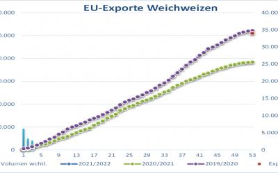 Strategie Grains schätzt EU-Weizenproduktion höher