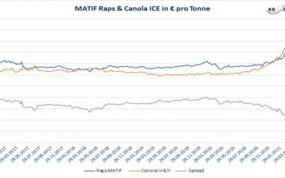 Hohe Nachfrage erwartet – Unterstützung für MATIF Rapspreise